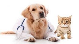 Pet Insurance Coverage